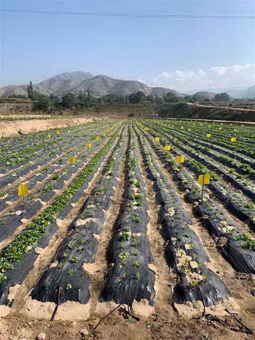 超大 超大现代农业 超大现代农业集团